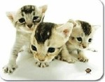 Allsop MousePad Cats at Play 06344