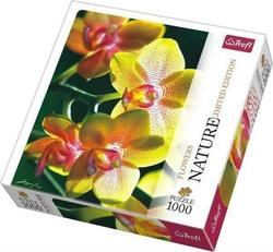 Nature Limited Edition Flowers: Orchid 1000pcs (10503) Trefl